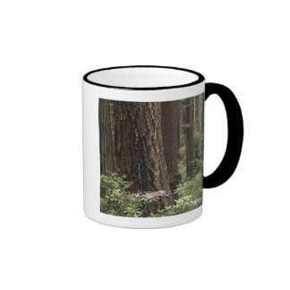 CA, Prairie Creek State Park, Coast Ringer Mug