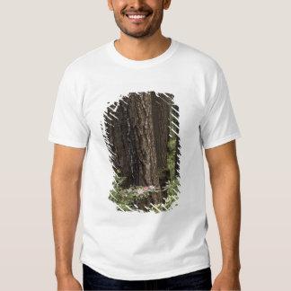 CA, Prairie Creek State Park, Coast Shirts