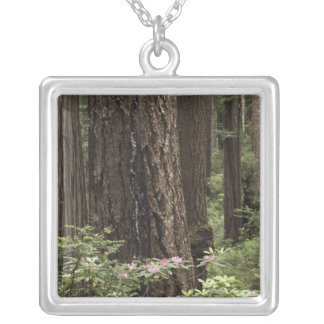 CA, Prairie Creek State Park, Coast Silver Plated Necklace