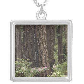CA, Prairie Creek State Park, Coast Square Pendant Necklace