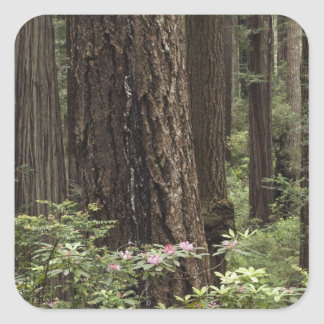 CA, Prairie Creek State Park, Coast Sticker