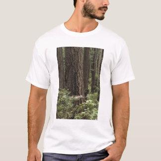 CA, Prairie Creek State Park, Coast T-Shirt