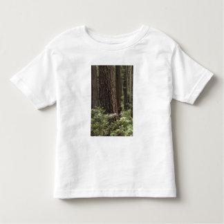 CA, Prairie Creek State Park, Coast Toddler T-Shirt