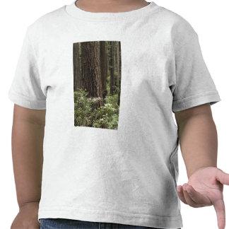 CA, Prairie Creek State Park, Coast T Shirts