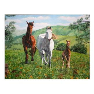 caballos postcard