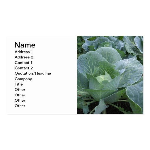 Cabbage Business Card Template