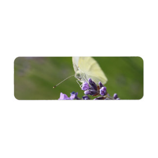 cabbage butterfly on lavendel