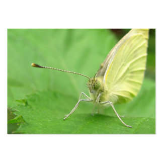 Cabbage White ~ ATC Pack Of Chubby Business Cards