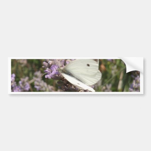 Cabbage White Butterfly Bumper Stickers