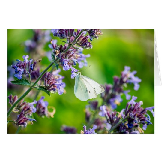 Cabbage White Butterfly Card