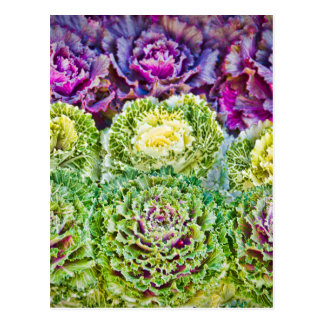 Cabbages Postcard