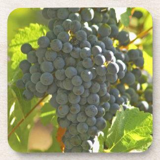 Cabernet Sauvignon grape bunch in the Chateau Coaster