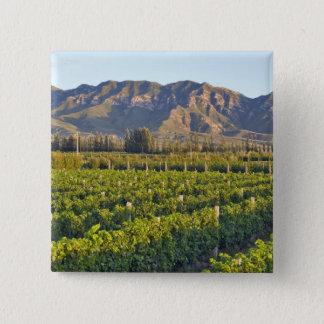 Cabernet Sauvignon vines in Huailai Rongchen 2 15 Cm Square Badge