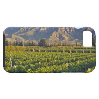 Cabernet Sauvignon vines in Huailai Rongchen 2 iPhone 5 Cover