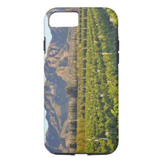 Cabernet Sauvignon vines in Huailai Rongchen 2 iPhone 7 Case