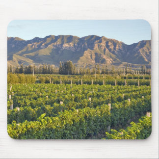 Cabernet Sauvignon vines in Huailai Rongchen 2 Mouse Pad