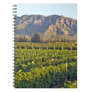 Cabernet Sauvignon vines in Huailai Rongchen 2 Notebooks