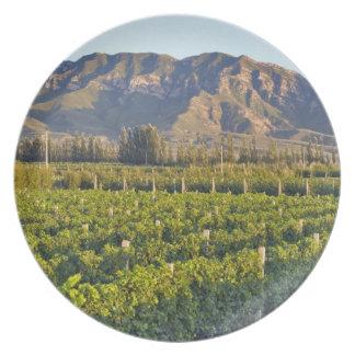 Cabernet Sauvignon vines in Huailai Rongchen 2 Plate