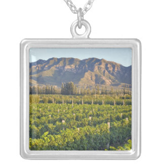 Cabernet Sauvignon vines in Huailai Rongchen 2 Silver Plated Necklace