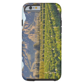 Cabernet Sauvignon vines in Huailai Rongchen 2 Tough iPhone 6 Case