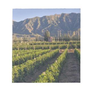 Cabernet Sauvignon vines in Huailai Rongchen Notepad