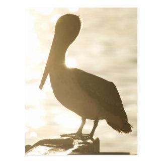 Cabo Pelican 3 Postcard
