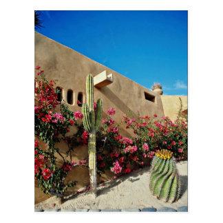Cabo San Lucas Baja Mexico flowers Postcards