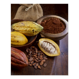 Cacao pod containing cacao beans which are poster
