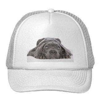 Cachorrinho cap hats