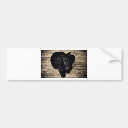 Cachorrito Bumper Sticker