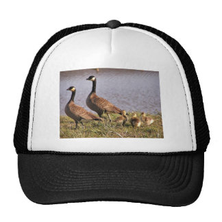 Cackling Canada goose brood Trucker Hats