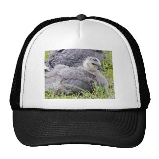 Cackling Canada goose gosling Mesh Hats