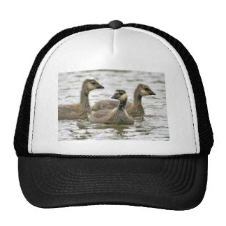 Cackling Canada goose goslings Hats