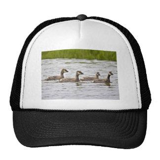 Cackling Canada goose goslings Mesh Hat