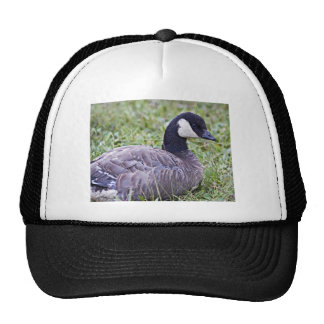 Cackling Canada goose Trucker Hat