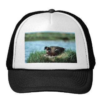 Cackling Canada goose on nest Trucker Hats