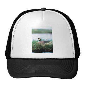 Cackling Canada goose on nest Trucker Hat