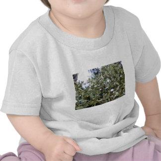 cacti 03 shirts
