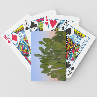 Cacti and sisal in Dry Forest Bicycle Playing Cards