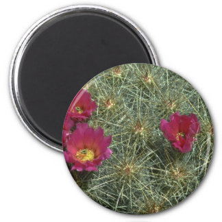 Cacti Colors Magnet