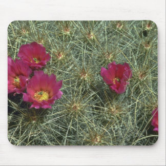Cacti Colors Mouse Pads