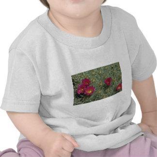 Cacti Colors Tee Shirts