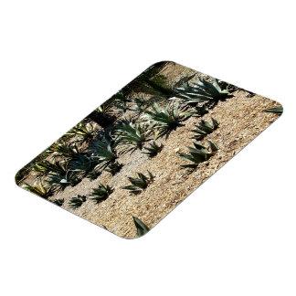 Cacti Field Rectangular Photo Magnet
