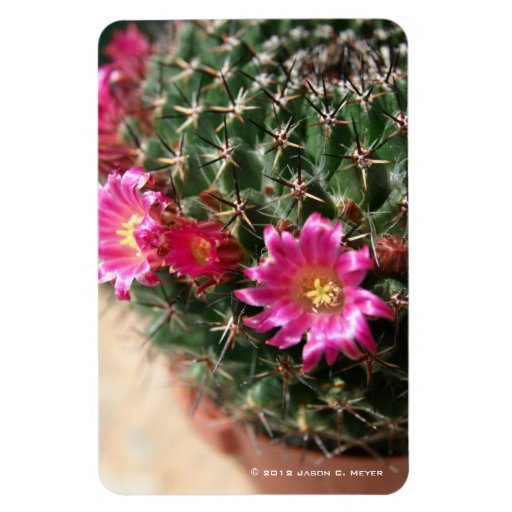 Cacti flowers rectangle magnet