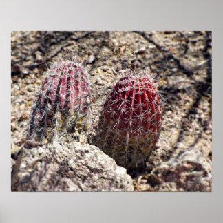 Cacti- Green Strawberry Hedgehog Poster
