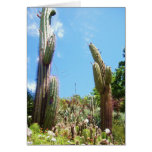 cacti in gardens greeting cards