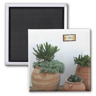 Cacti in Terracotta Pots Square Magnet