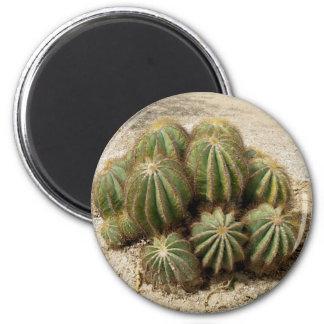 Cacti Fridge Magnet