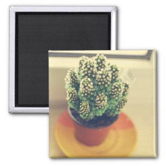 Cacti Fridge Magnets