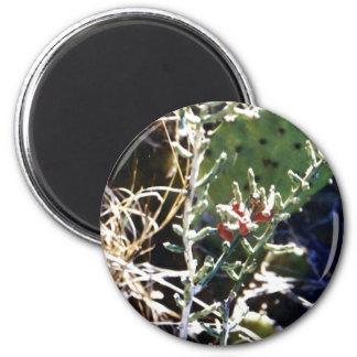 Cacti 6 Cm Round Magnet